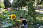 23_jardin_partage_schluthfeld